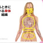 ◆【潜在意識と声の関係】3要素連携発声法